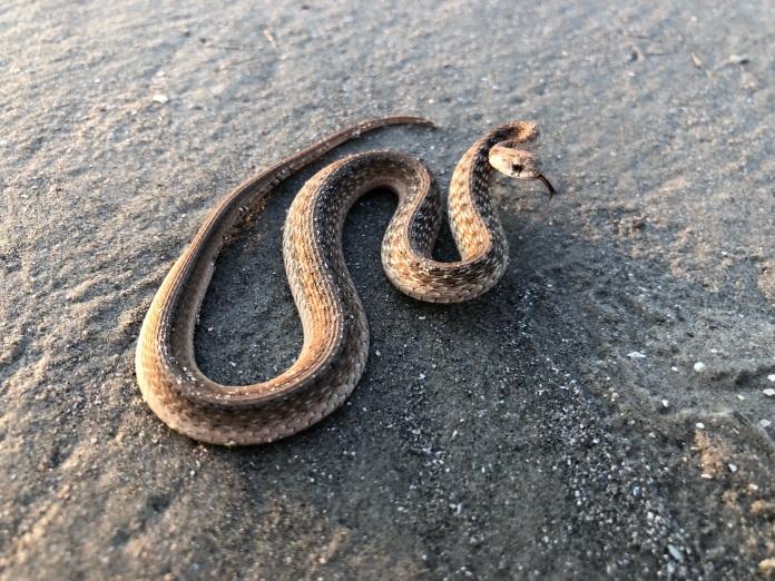 snakesonthebeach